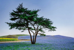 Wizard+Genius Tree in Blue Flower Field in Japan Vlies Fotobehang 384x260cm 8-banen | Yourdecoration.be