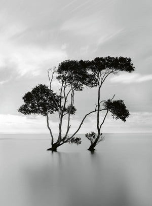 Wizard+Genius Trees In The Still Water Vlies Fotobehang 192x260cm 4-banen | Yourdecoration.be