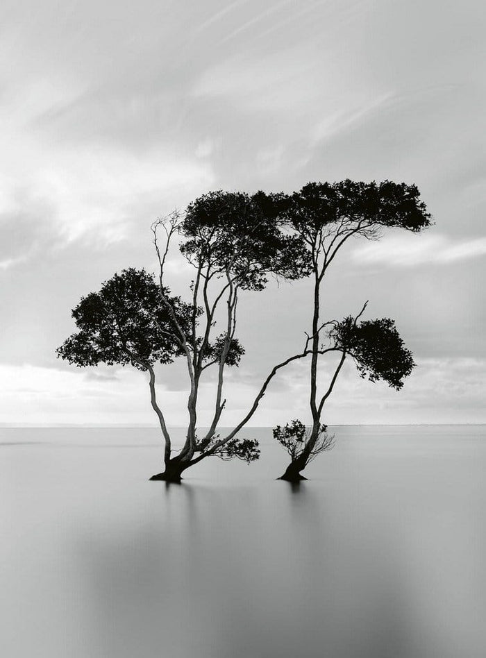Wizard+Genius Trees In The Still Water Vlies Fotobehang 192x260cm 4-banen