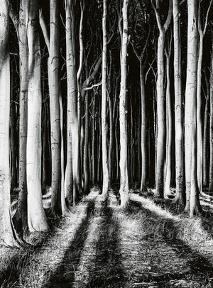 Wizard+Genius Ghost Forest Vlies Fotobehang 192x260cm 4-banen | Yourdecoration.be
