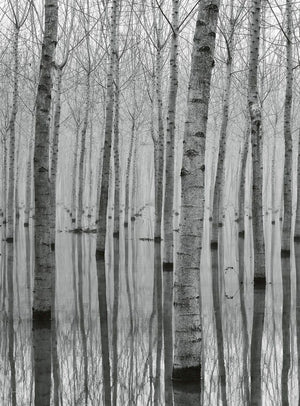 Wizard+Genius Birch Forest In The Water Vlies Fotobehang 192x260cm 4-banen | Yourdecoration.be