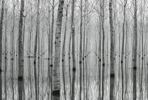 Wizard+Genius Birch Forest in the Water Vlies Fotobehang 384x260cm 8-banen | Yourdecoration.be