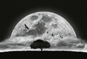 Wizard+Genius Moon and Birds Vlies Fotobehang 384x260cm 8-banen | Yourdecoration.be