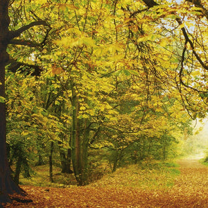 Komar Autumn Forest Fotobehang 388x270cm | Yourdecoration.be