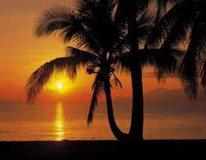 Komar Palmy Beach Sunrise Fotobehang 368x254cm | Yourdecoration.be