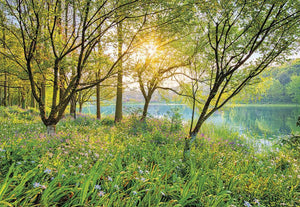 Komar Spring Lake Fotobehang National Geographic 368x254cm | Yourdecoration.be