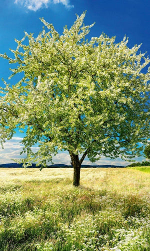 Dimex Blossom Tree Fotobehang 150x250cm 2-banen | Yourdecoration.be