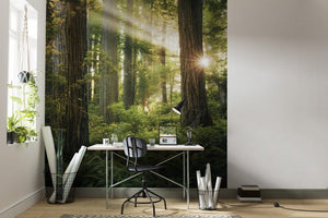 Komar Goblins Woods Vlies Fotobehang 250x280cm 5-banen Sfeer | Yourdecoration.be