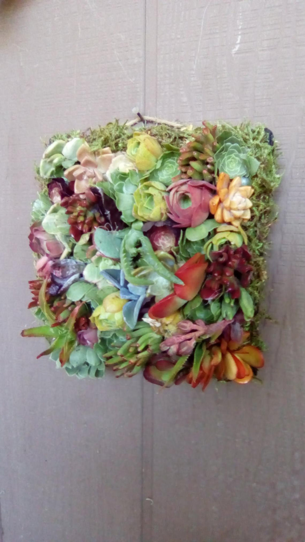 Succulent Plant Window Box Living Wreath