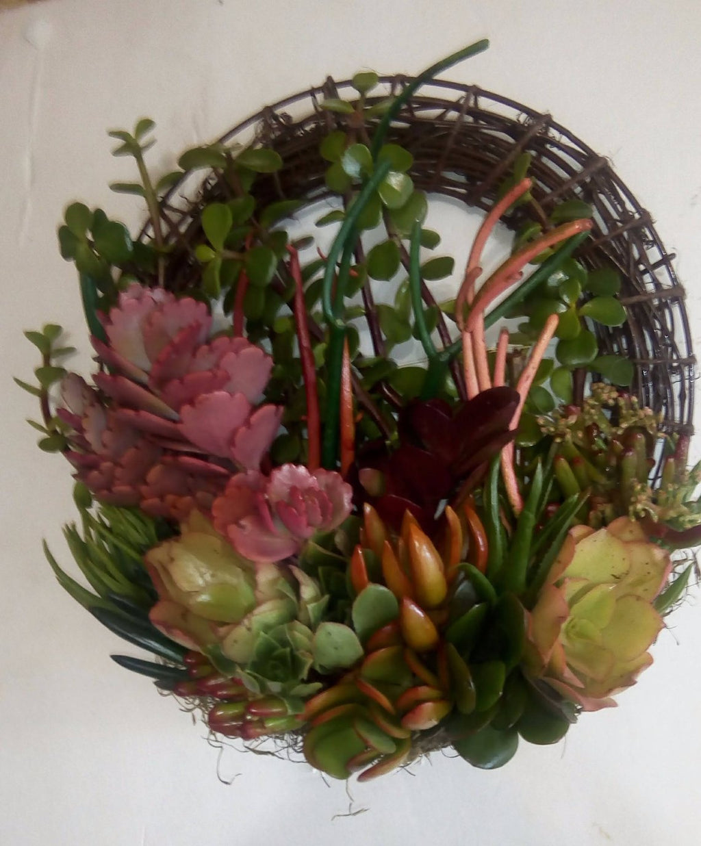 SPECIAL 16 inch willow branches living wreath of growing succulent plants