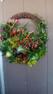 Full of Color 12 inch Living Wreath of Willow Branch and Growing and Living Succulent Plants Succulent Clippings