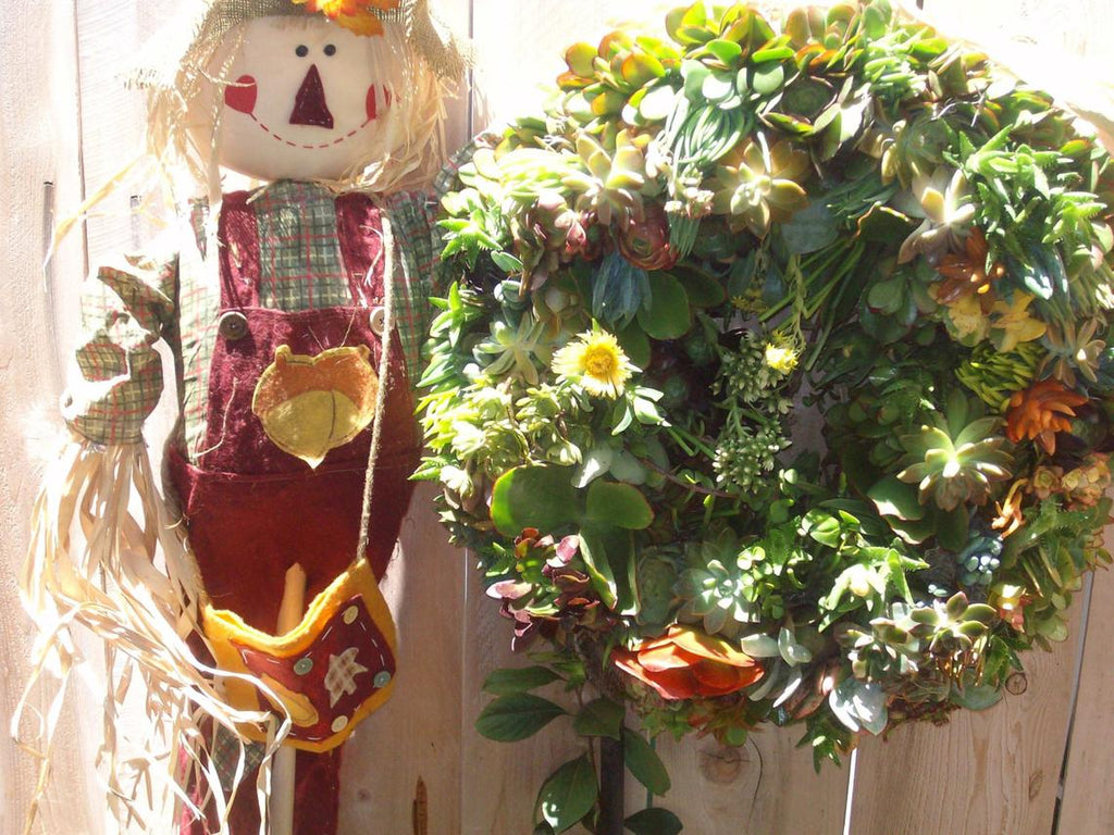 20 Inch Living Wreath of Succulent Plants