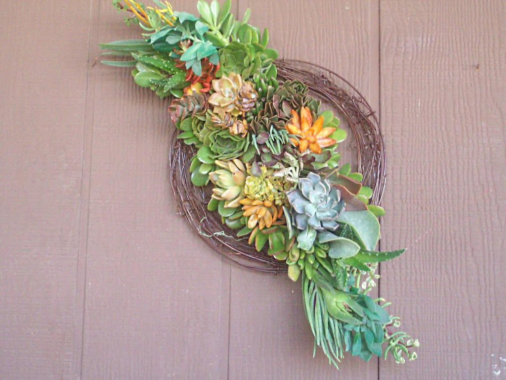 Growing Succulent Plant Sash Living Wreath
