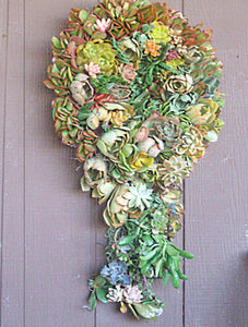 Super Unique Living Wreath as Flowing Globe of Growing Succulent Plants.