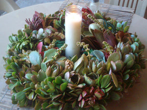 Growing Color Living Succulent Plant Wreath Glass Enclosed Candle Centerpiece succulent cuttings starts succulent clippings