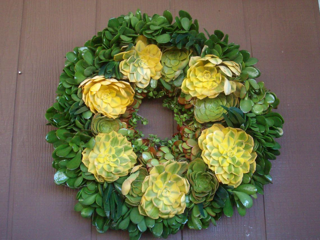 Special Collection Growing Succulent Plants Living Wreath