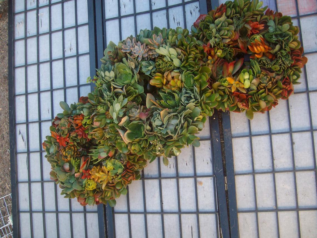 Living 3 Wreath Collage of Succulent Plant Color