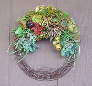 Growing Full Crescent Succulent Plant Living Wreath