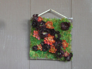 Growing Picture Box of Succulent Plants Living Wreath