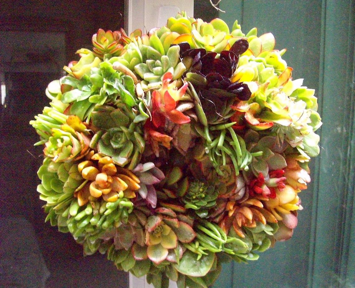 14 inch Growing Succulent Plant Living Wreath