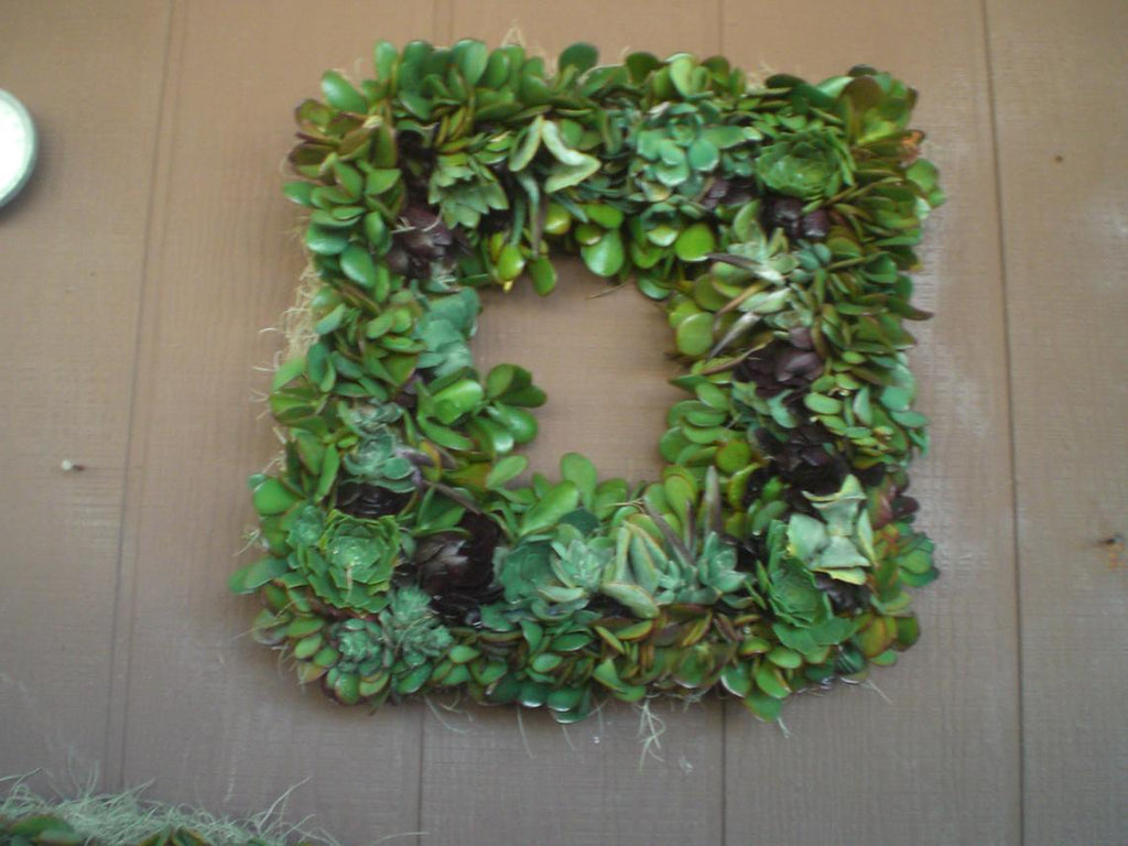Box Frame Growing Succulent Plant Living Wreath.