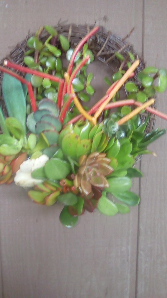 18 inch Willow Branches SPECIAL Living Wreath of Succulent Plants