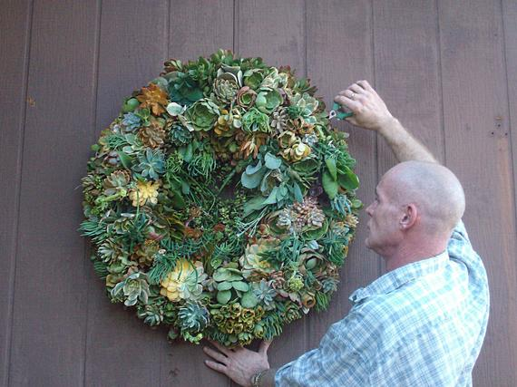 24 inch Living Wreath of Succulent Plants
