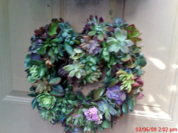 Valentine's Living Color Heart of Growing Color Succulent Plants Living Wreath succulent starts succulent cuttings succulent clippings