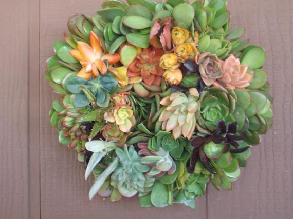 16 Inch Growing Living Wreath of Succulent Plants