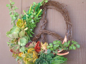 Living Peace Sign Succulent Plants Living Wreath