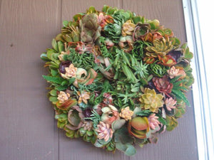 22 Inch Living Wreath of Succulent Plants