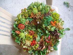 18 Inch Living Wreath of Growing Succulent Plants