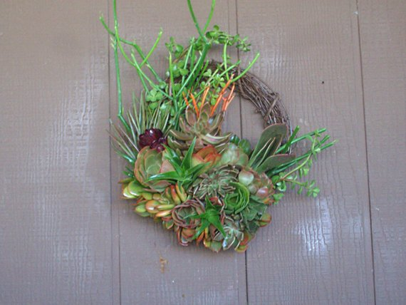 15 inch Living Succulent Plant Willow Branch Wreath