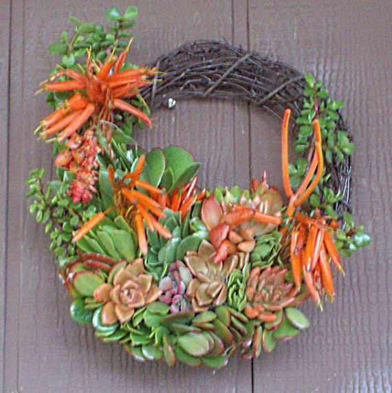 Living Color 13 inch SPECIAL Willow Branches Succulent Plant Living Wreath cutting succulent start clipping