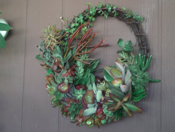 Valentines Living Color 11 inch Growing Succulent Plants Willow Branches Living Wreath Succulent Cuttings Succulent Clippings