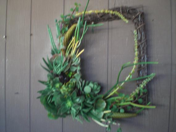 14 inch Willow Branch Squared Living Wreath of Succulent Plants