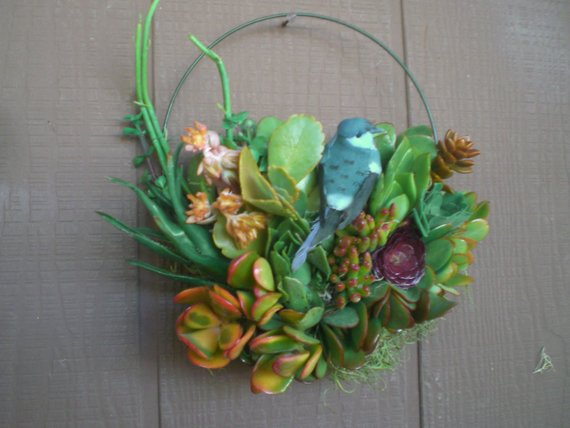 Living Succulent Plants Bird Song Living Wreath
