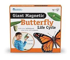 Giant Magnetic Butterfly Life Cycle - iPlayiLearn.co.za  - 1