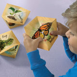 LifeCyclers™ Butterfly, Frog and Plant - iPlayiLearn.co.za  - 2