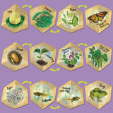 LifeCyclers™ Butterfly, Frog and Plant - iPlayiLearn.co.za  - 3
