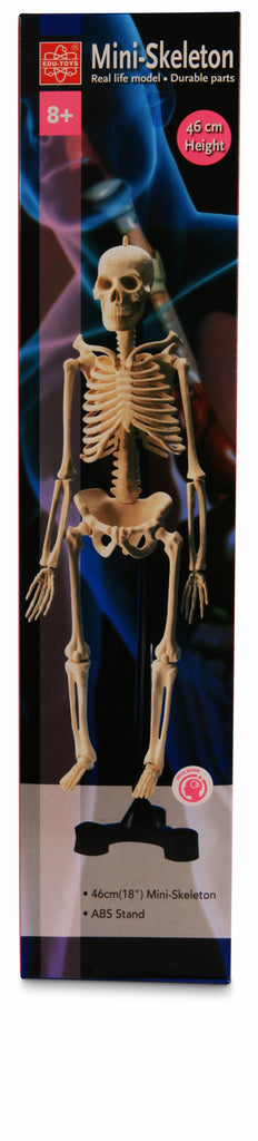 Mini Skeleton Model 46cm