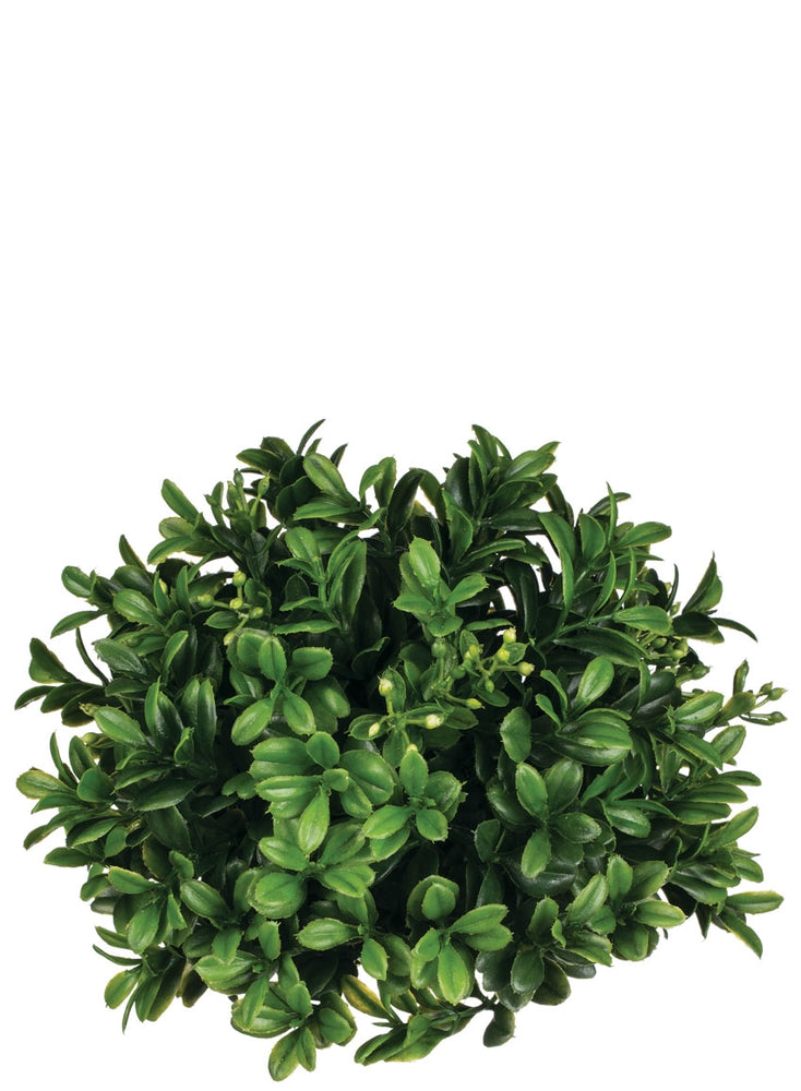 Boxwood Bunch - Madison Mackenzie Home