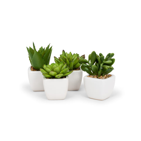 Succulents - Set of Four in White Pots