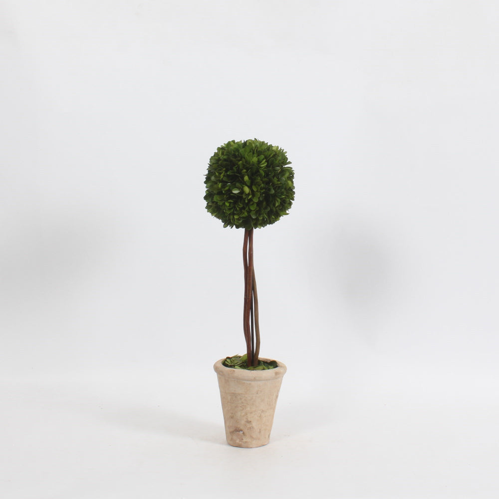 BOXWOOD TOPIARY WILLOW STEM - 50 CM