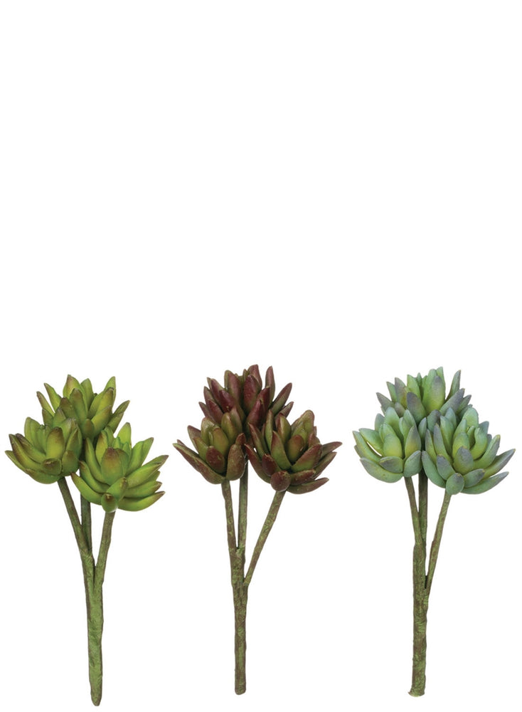Agave Assortment - Madison Mackenzie Home