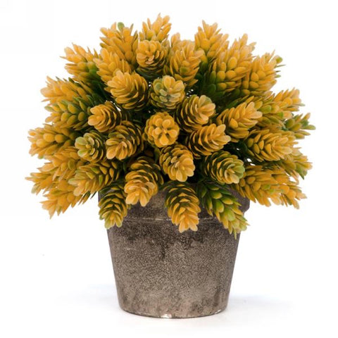 Yellow potted plant