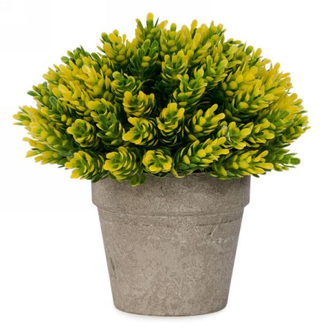 Holland Potted Plant