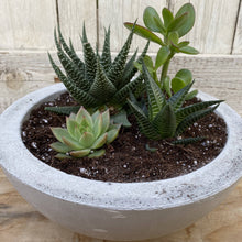 Load image into Gallery viewer, Cement Planter Bowl Medium