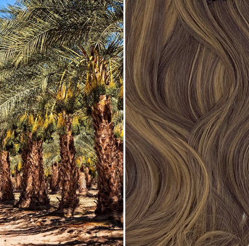 LOXX Classic Curly - Date Palm