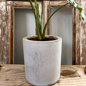 Cement Planter Cylinder Shape Large